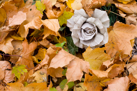 Artificial, weathered, cemetery rose among autumn leaves and ivy. Standard-Bild - 115234778