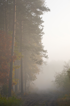 Morning fog in the forest. Gold autumn. Misty early morning.