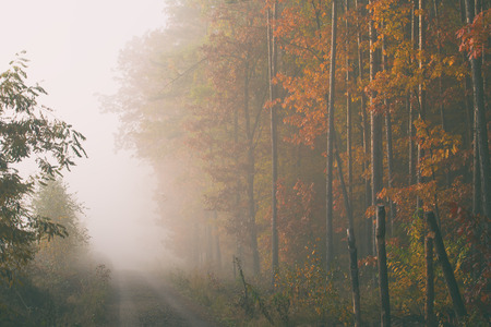 Morning fog in the forest. Gold autumn. Misty early morning. Standard-Bild - 115239147