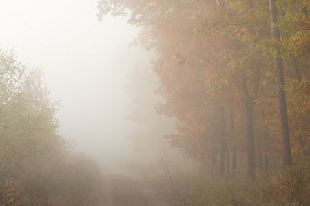 Morning fog in the forest. Gold autumn. Misty early morning. Standard-Bild - 115235079