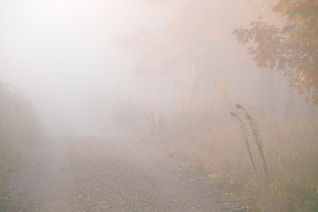 Morning fog in the forest. Gold autumn. Misty early morning. Standard-Bild - 115235083