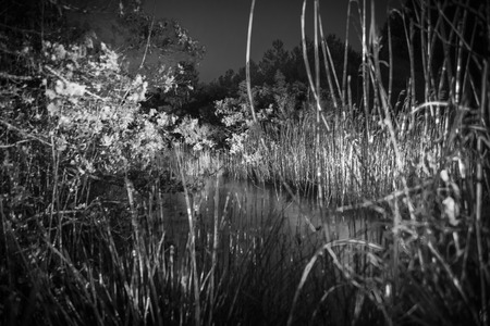 vegetation: Vegetation at night illuminated by a spotlight in black and white