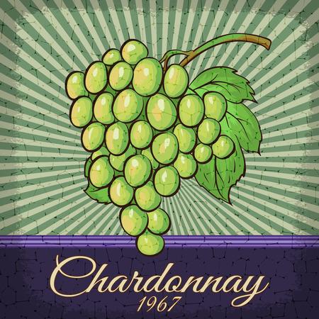 chardonnay: Chardonnay Grape retro poster design.Vintage vector illustration.