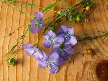 linum: linum, flax lies on a board