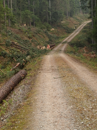 sustained: forestry, cut trees near a dirt road Stock Photo