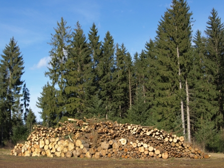 chaff: timber yard with woodpile ready to chaff