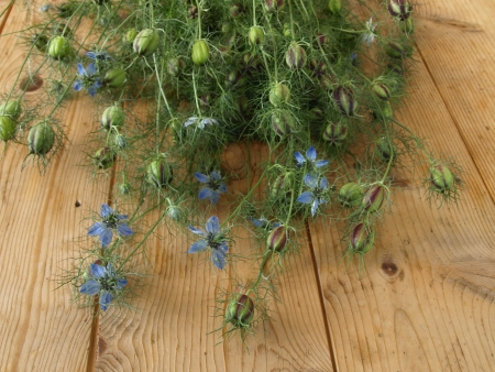 love-in-a-mist on a wooden board photo