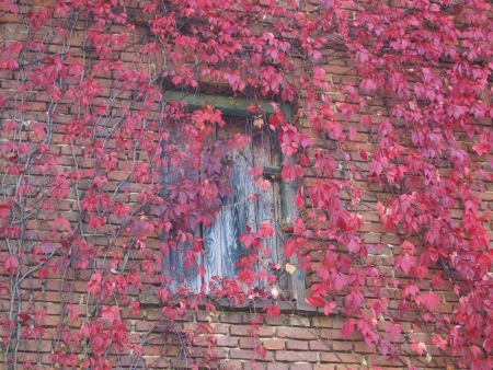 clinker: wooden door and front of an old brick house with climbing plant Stock Photo