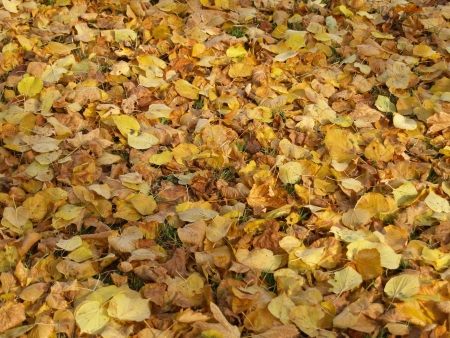 autumnally: foliage in autumn on the ground