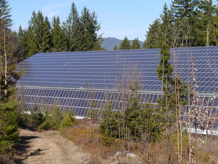 bioenergy: solar energy in the wood