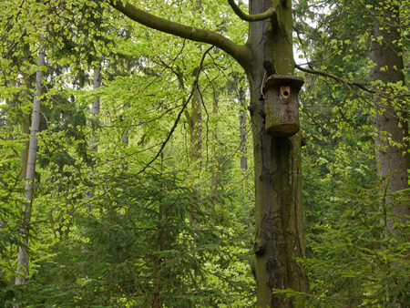 nest box for birds in the wood photo