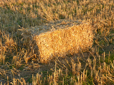 field with rectangular straw bales