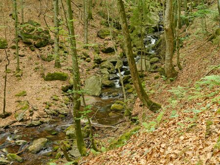 stream H?llbachgspreng, wooded rock massif below the Grosse Falenstein mountain, national park Bavarian Forest