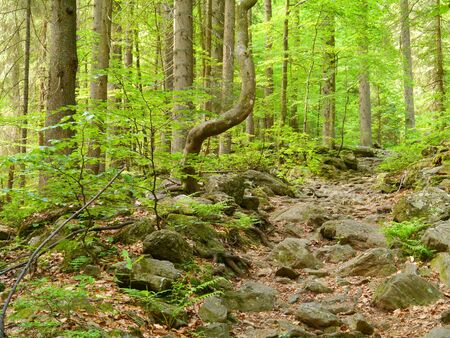 walk to waterfall H?llbachgspreng, wooded rock massif below the Grosse Falenstein mountain, national park Bavarian Forest