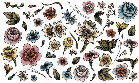 rose stem: Detailed hand drawn flower and leaf set