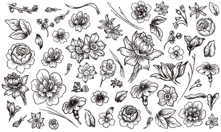 rose bud: Detailed hand drawn flower and leaf set