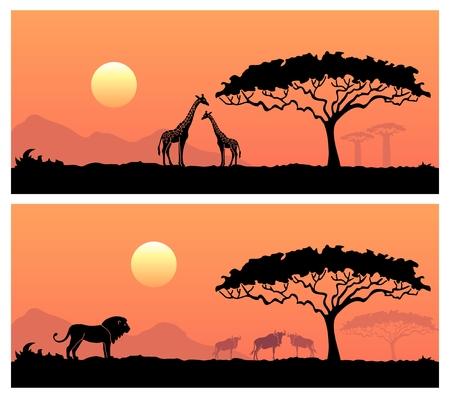 アフリカの夕日を背景に野生動物