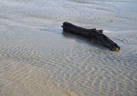 해변에서 유 목의 조각입니다.