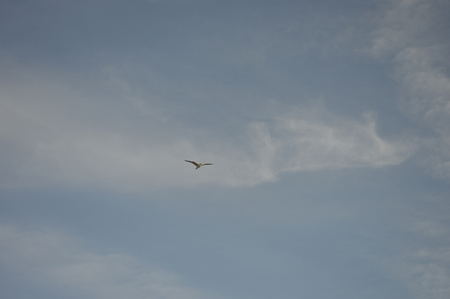 A distant bird sharing the sky with some clouds.