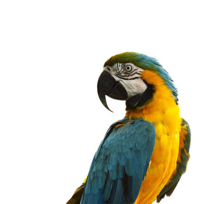 gaiety: Close-up of gaiety plumage parrot