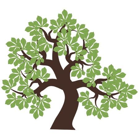 식물상: 흰색 배경에 밤나무 일러스트