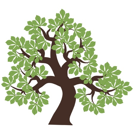 chestnut tree on white background Illustration