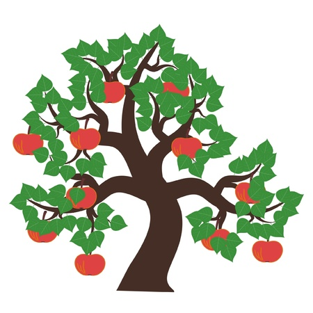 apple tree on white background Stock Vector - 11886063