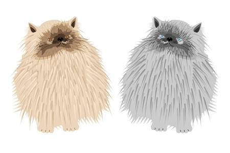 downy: persian cats on white background