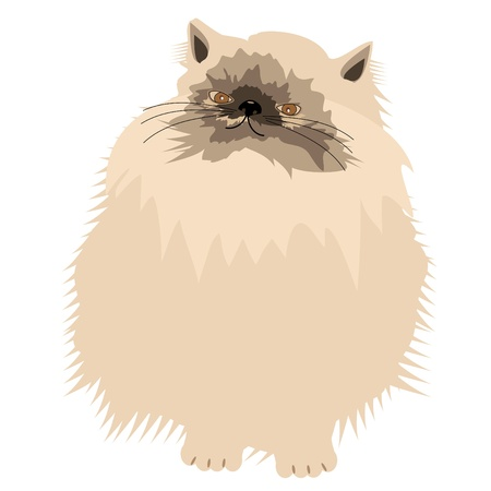 nice persian cat on white Stock Vector - 12364101