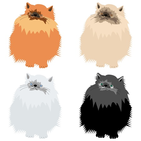 nice persian cats on white Stock Vector - 12364171