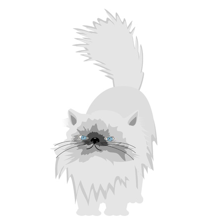 nice persian cat on white background Stock Vector - 12364266