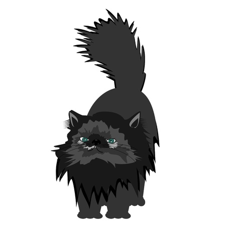 nice persian cat on white background Stock Vector - 12364268