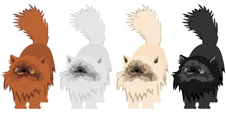 four persian cats on whitte background Vector