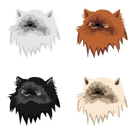 four persian cats on white background Stock Vector - 12364519
