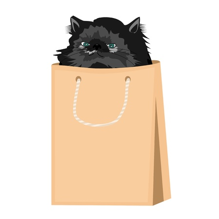 nice persian cat in paper bag Vector