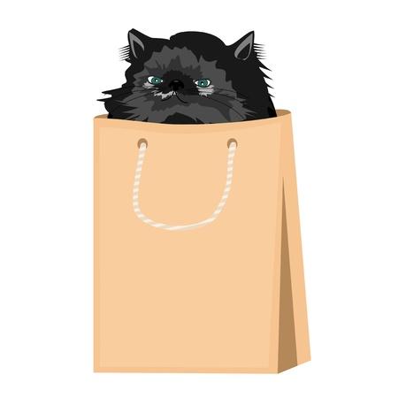 nice persian cat in paper bag Stock Vector - 16242006