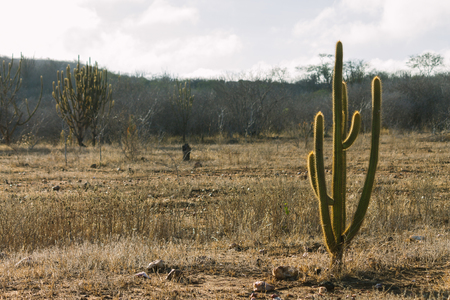 northeast: Landscape of the caatinga in Brazil Stock Photo