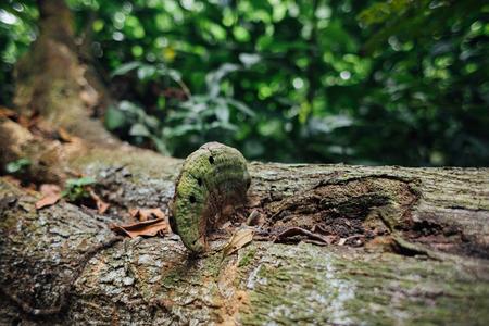 森の倒れた木の幹に生えたキノコします。 写真素材