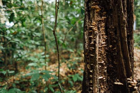 森の木の幹に生えたキノコします。 写真素材