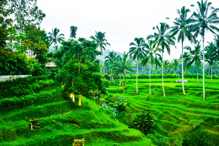 ce terrace and coconut palm trees in the fresh air morning for family children school holiday retreat and honeymoon vacation in South East Asia Stock Photo