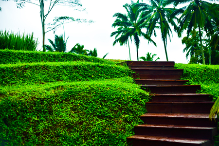Wood stairway to heaven in the rice terrace for holiday and honeymoon vacation in rain forest tropical jungle of South East Asia Stock Photo