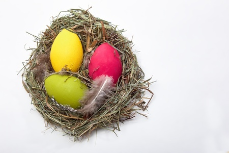 free plate: Three Easter eggs in a nest on white  Stock Photo