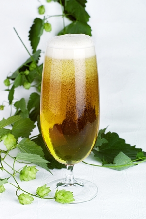 a glass of fresh tapped beer with hop plants decorated before bright background