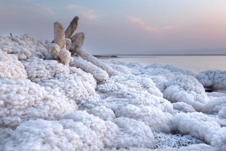 dead sea: Rock and wooden branch covered with salt in Dead Sea, Jordan