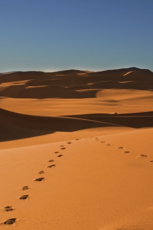 Footsteps in the Sahara desert - Niger photo