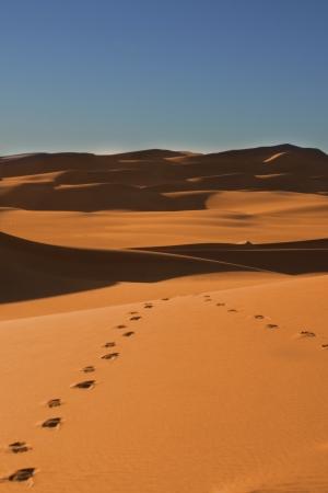 Footsteps in the Sahara desert - Niger Stock Photo - 14798125