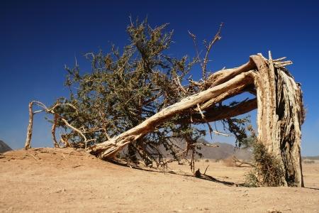 Lonely broken tree in Sahara desert - Niger Stock Photo