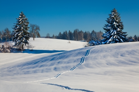 Winter landscape with snowy trees and path in snow Stock Photo