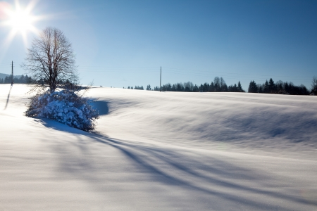 Winter Landscape with tree, sun and shadows