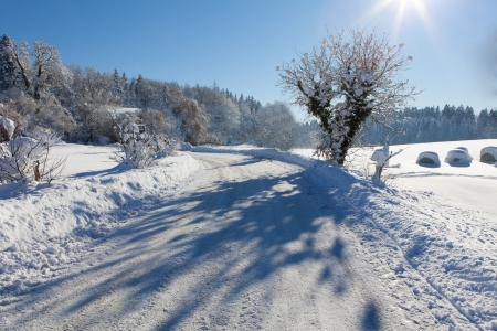 Frozen trees and road in a field, with beautiful shadows